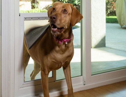 Freedom+ Pet Doors Manufactured by Anlin Windows and Doors